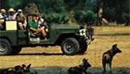 Hyena's by tour car